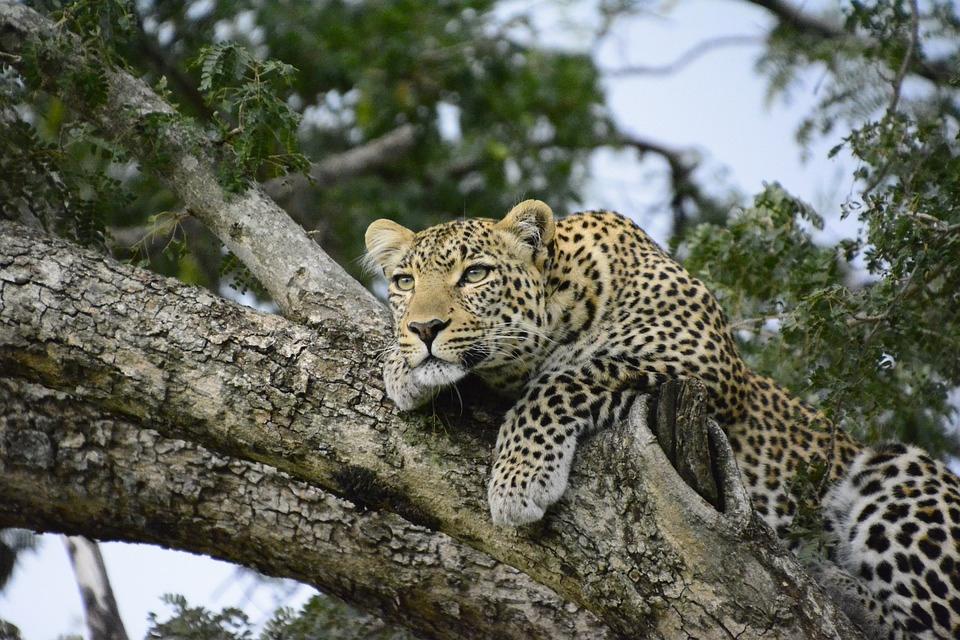 Le safari, l'une des meilleures activités que vous pourrez faire au Kenya