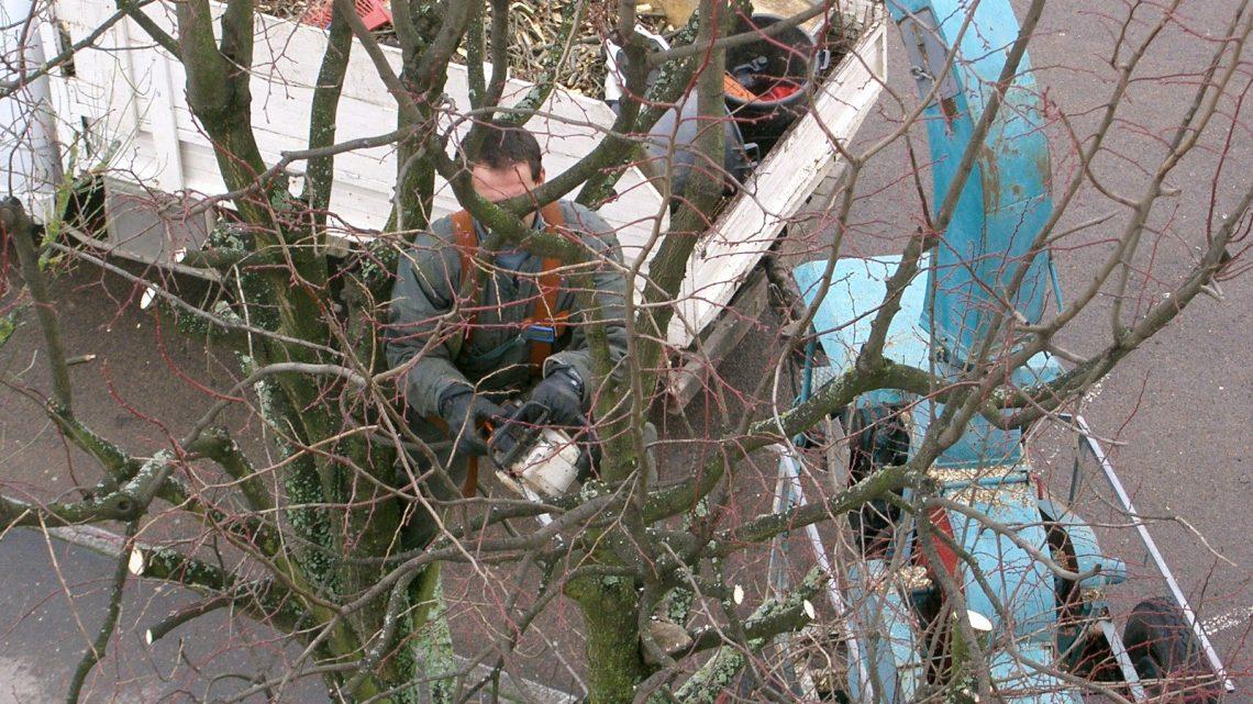 Tailler un arbre : les techniques de base