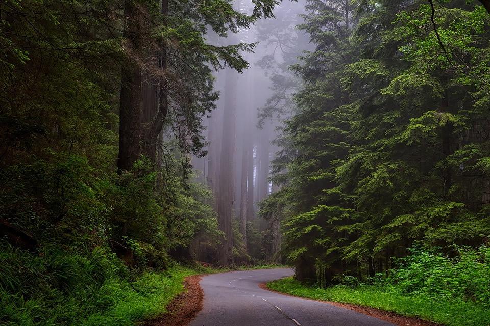 Quels sont les avantages fiscaux du placement d'argent dans l'investissement forestier?