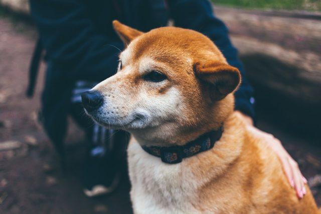 Quel type de traceur GPS pour chien faut-il choisir ?